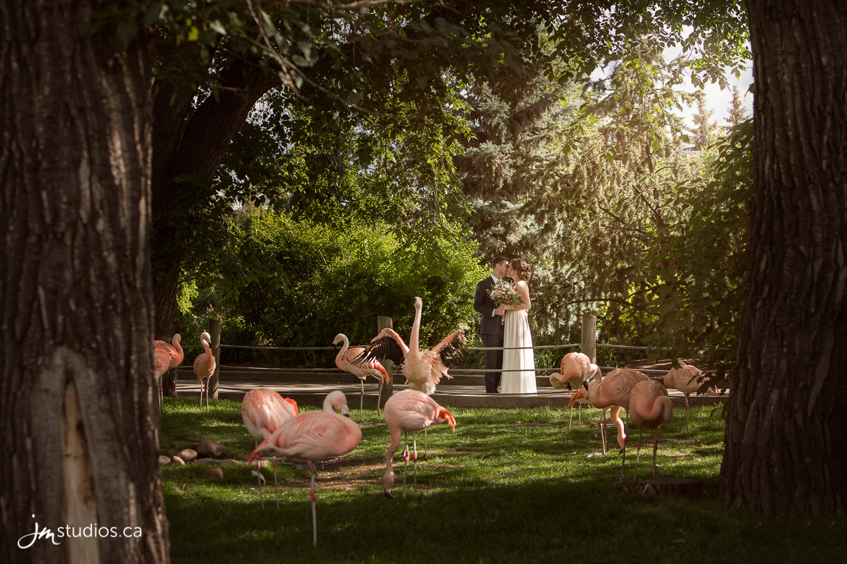 180630_4675-Calgary-Zoo-Wedding-Photos-Photographer-JM_Photography
